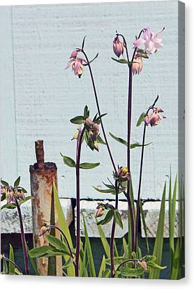 Pink Doves Canvas Print by Pamela Patch