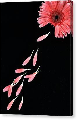 Pink Flower With Petals Canvas Print by Photo by Bhaskar Dutta