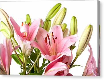 Pink Lilies 04 Canvas Print by Nailia Schwarz