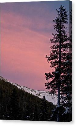 Pink Sunset Canvas Print by Lisa  Spencer