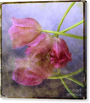 Pink Tulips Canvas Print by Bernard Jaubert