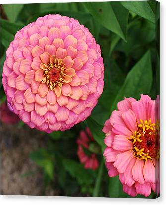 Pinks The Color Canvas Print by Bruce Bley