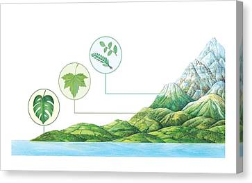 Plant Communities, Artwork Canvas Print by Gary Hincks