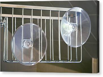 Plastic Suction Cups Canvas Print by Sheila Terry