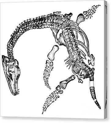 Plesiosaurus Canvas Print by Science Source