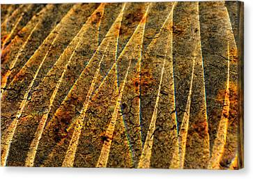 Points Of Light Canvas Print by Susan Capuano