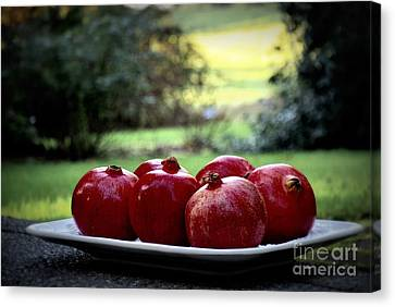 Pomegranates On White Platter 3 Canvas Print by Tanya  Searcy