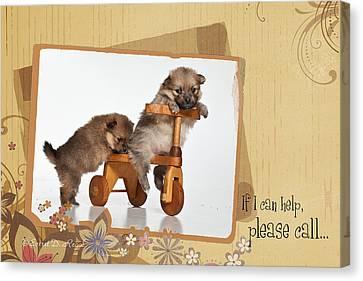 Pomeranian 1 Canvas Print by Everet Regal