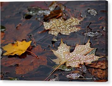Pond Leaf Dew Drops Canvas Print by LeeAnn McLaneGoetz McLaneGoetzStudioLLCcom