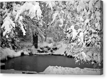 Pond Mystere Canvas Print by Mike Reid