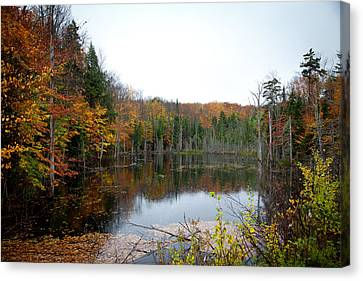 Pond On Limekiln Road In Inlet New York Canvas Print by David Patterson