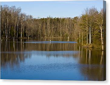 Pond Relflections Canvas Print by Terry Thomas