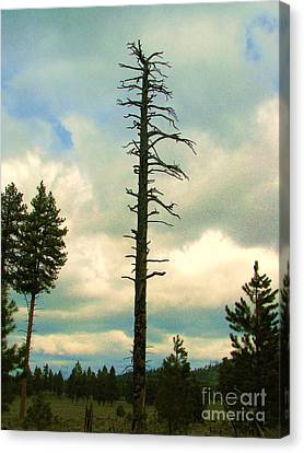 Ponderosa Pine Snag Canvas Print by Michele Penner