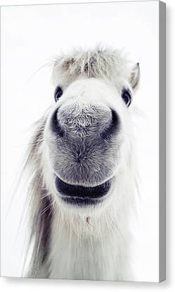 Pony Looking Into Camera Canvas Print by Elke Vogelsang