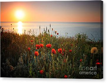 Poppies In The Sunrise Canvas Print by Ionut Hrenciuc