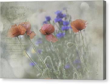 Poppy Photo Canvas Print by Carolyn Dalessandro