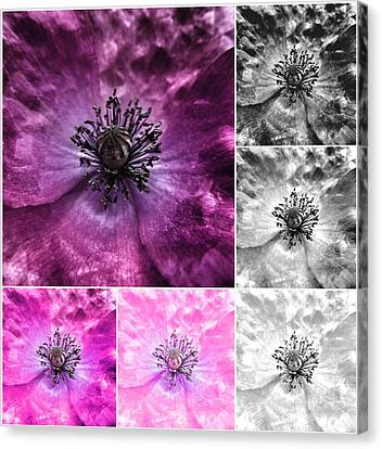 Poppy Purple - Macro Flowers Fine Art Photography Canvas Print by Marianna Mills