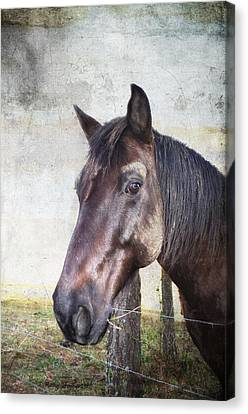 Portrait Of A Horse Series V Canvas Print by Kathy Jennings