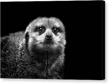 Portrait Of Meerkat Canvas Print by Malcolm MacGregor