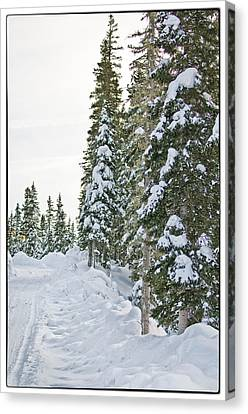 Powdery Snow Path Canvas Print by Lisa  Spencer