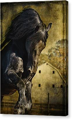 Power House Horse D1496 Canvas Print by Wes and Dotty Weber
