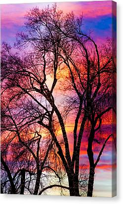 Powerful Trees Canvas Print by James BO  Insogna