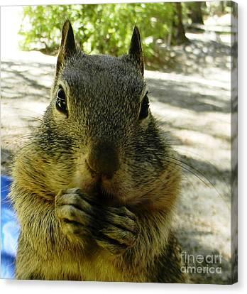 Praying Nuts Canvas Print by DJ Laughlin
