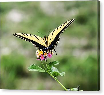 Prepare For Take Off Canvas Print by Kelly Rader