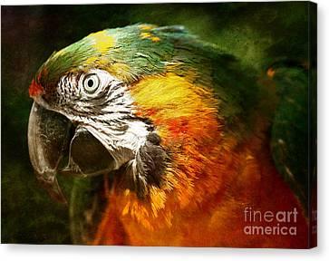 Pretty Polly Canvas Print by Lee-Anne Rafferty-Evans