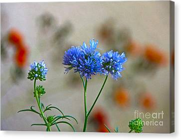 Pretty Weeds Canvas Print by Byron Varvarigos