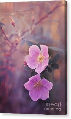 Prickly Rose Canvas Print by Priska Wettstein