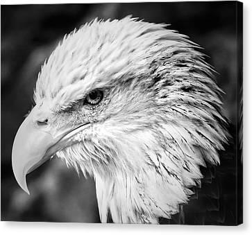 Pride Of America Canvas Print by Nicholas Evans