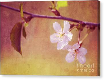 Primavera Canvas Print by Angela Doelling AD DESIGN Photo and PhotoArt