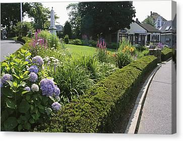 Public Garden With Blooming Hydrangeas Canvas Print by Darlyne A. Murawski