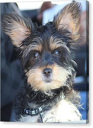 Puppy Eyes Canvas Print by Static Studios