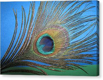 Purdy As A Peacock Canvas Print by Kathy Clark