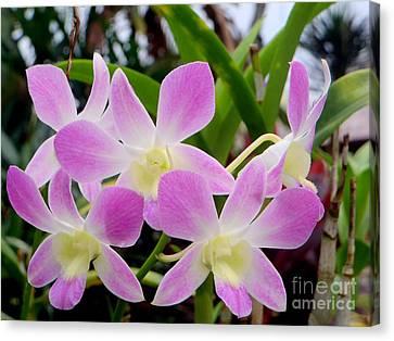 Purple Balinese Flower Canvas Print by Samantha Mills