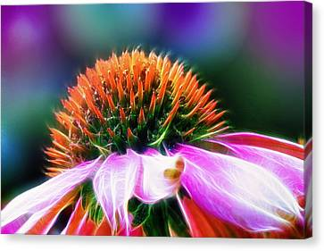 Purple Coneflower Delight Canvas Print by Bill Tiepelman