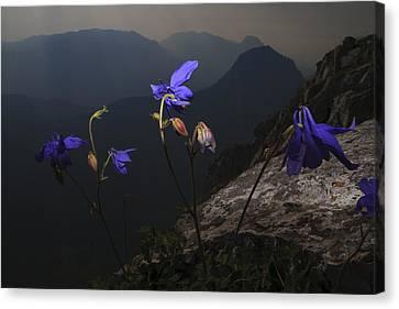Purple Flames Canvas Print by Fernando Alvarez
