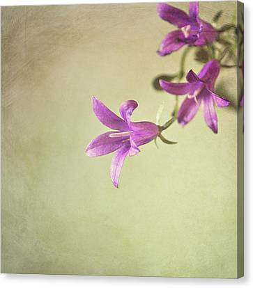 Purple Flowers Canvas Print by Photo - Lyn Randle