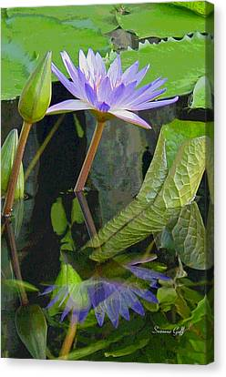 Purple Lotus Canvas Print by Suzanne Gaff