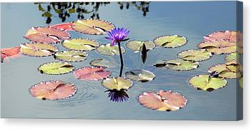 Purple Mirror Canvas Print by