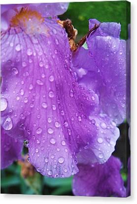 Purple Rain Canvas Print by Todd Sherlock