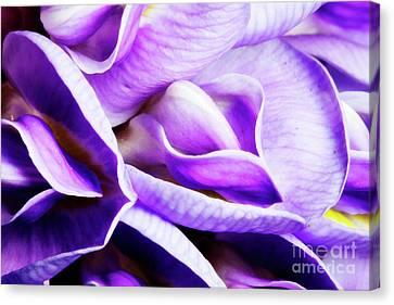 Purple Wisteria Fower Canvas Print by Keith Kapple