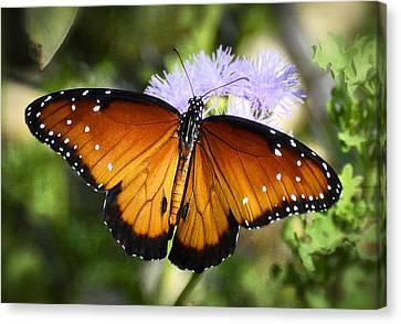 Queen Butterfly On Flower  Canvas Print by Saija  Lehtonen