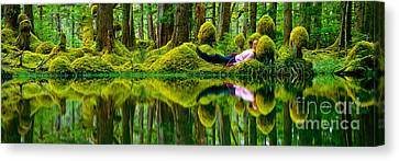 Queen Charlotte Island Swamp Canvas Print by David Nunuk