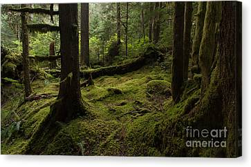 Quietly Alive Canvas Print by Mike Reid
