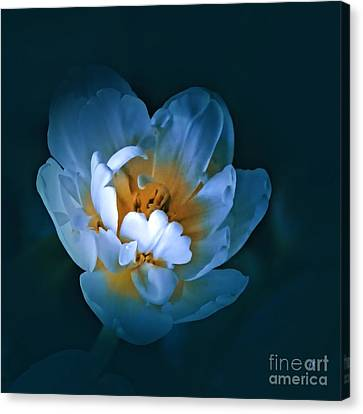 Radiance Canvas Print by Gerlinde Keating - Keating Associates Inc