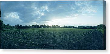 Raf Winkton Cornfield Canvas Print by Jan W Faul