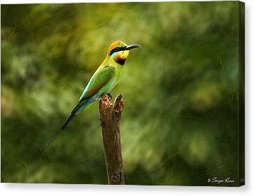 Rainbow Bee-eater Canvas Print by Tanya Rossi